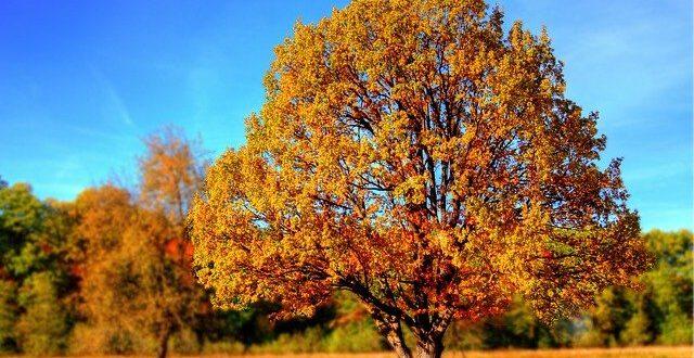 Trucs pour tailler et soigner les branches d'arbres