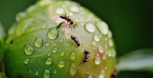 Des fourmis dans vos plantes?