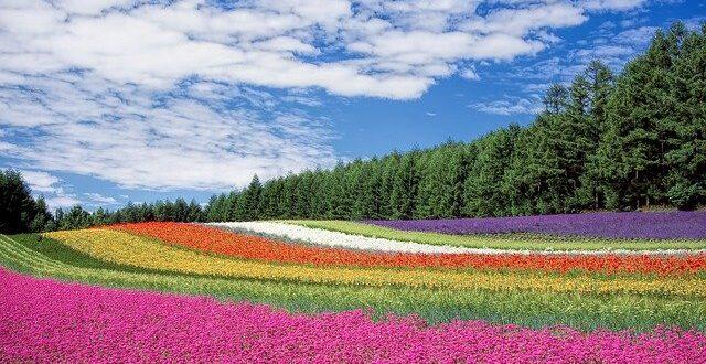 Trucs de jardinage et de protection de l'environnement