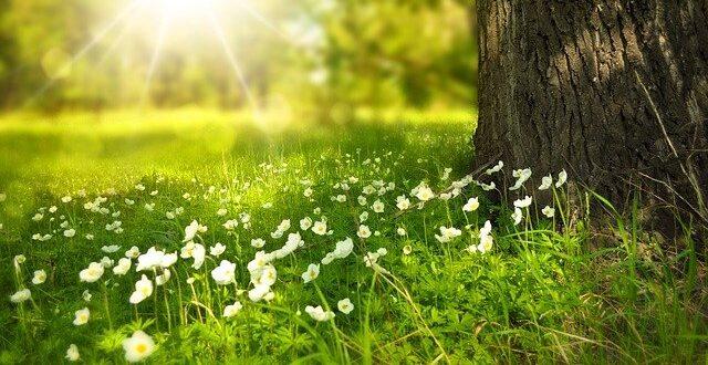 Planter au printemps ou à l'automne?