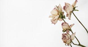 Voici quelques trucs et astuces pour faire de belles fleurs séchées.