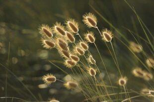 Semis: Trucs et astuces avant de semer