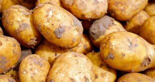 Trucs pour planter vos Patates